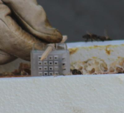 Introduction dans la ruche